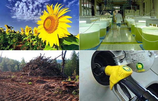 Lo que debes saber sobre los biocombustibles