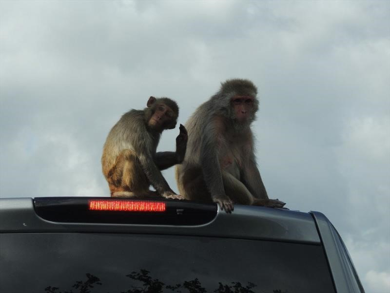 Acusan a las automotrices alemanas de experimentar en monos y personas