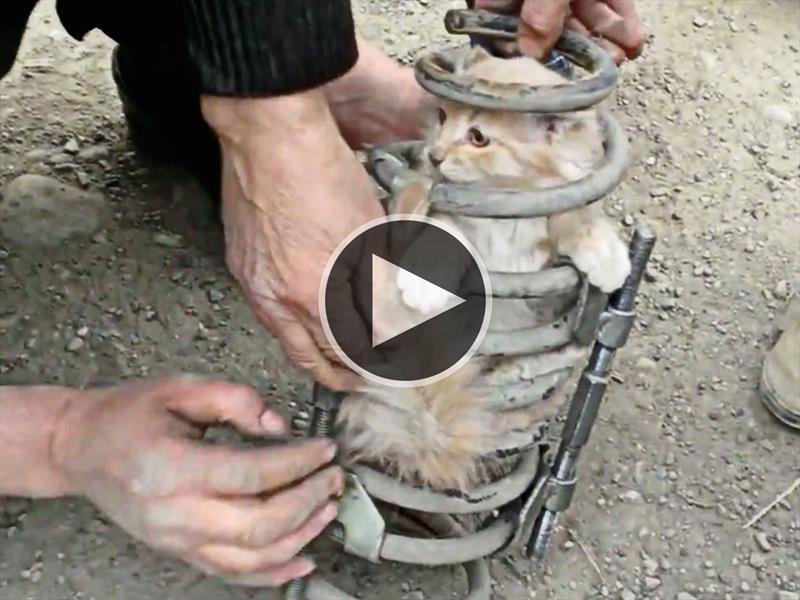 Video: Un gato queda atrapado en la suspensión de una Toyota Land Cruiser Prado