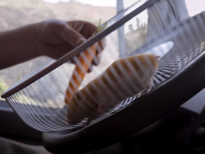 Video: Un hámster que maneja un camión